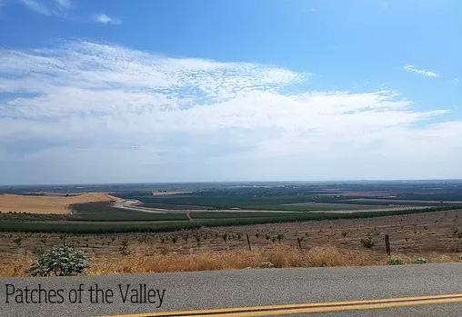 Patches of the Valley