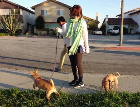 Read-Write Dog Culture