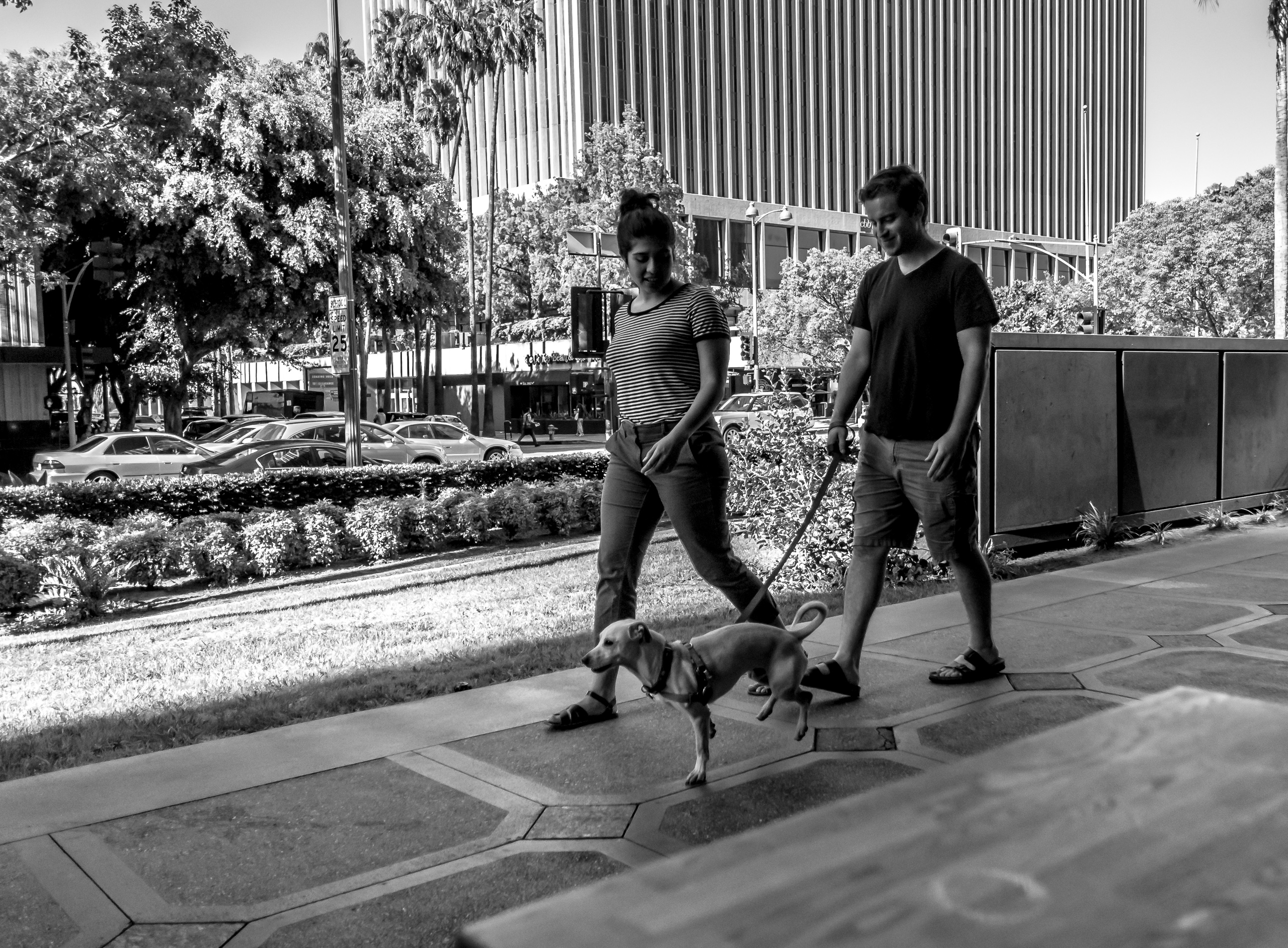 A couple and a dog walking down Wilshire Blvd in Los Angeles