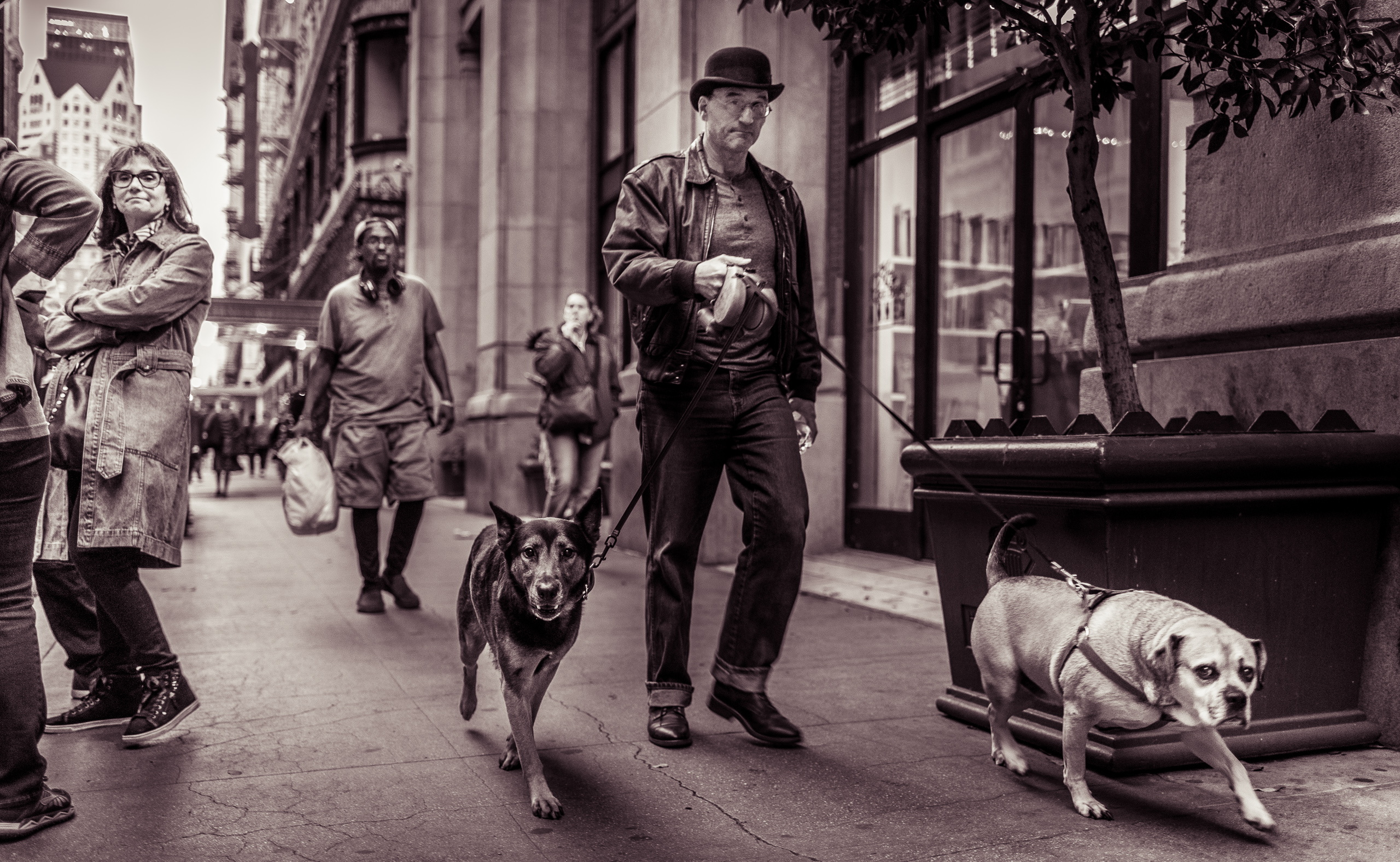 a man walks 2 dogs southeast on 5th Street in front of The Last Bookstore in DTLA