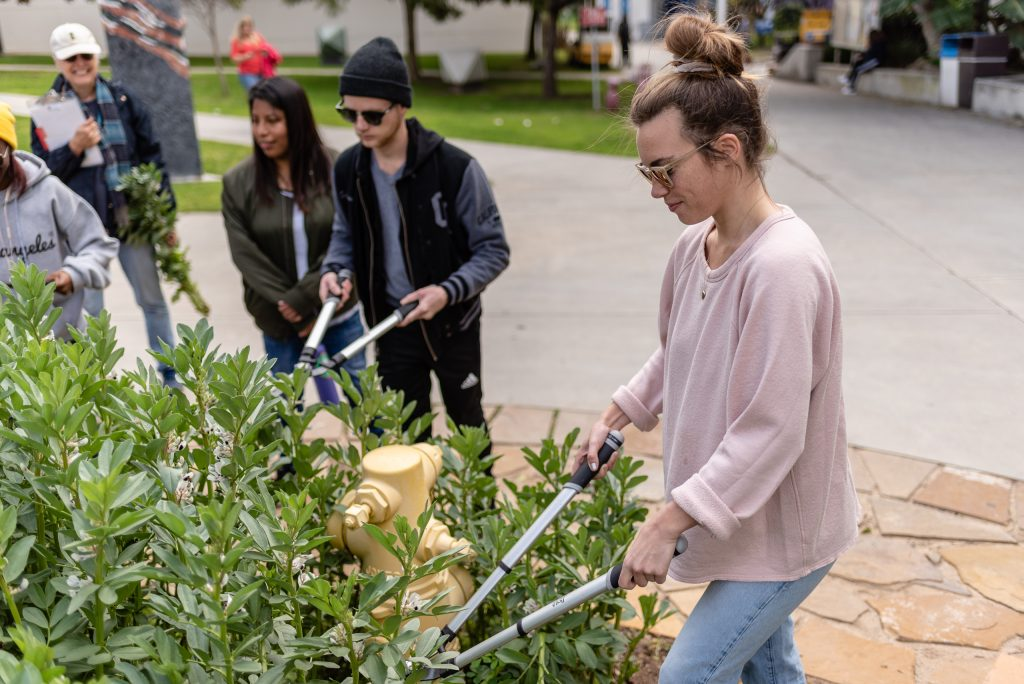 "Madlyn Spence, A 27-Year-Old Conservation Biology Major From Chicago Chops Fava Stalks In The SMC Organic Learning Garden (OLG) On Tuesday, March 5, 2019. Spence And Other Members Of Club Grow Are Chopping The Fava Stalks As Part Of Club Grow's ""Composting With Cover Crop"" Activity. Club Grow Meets Every Tuesday In The OLG. Spence Has Been Participating At The OLG Since 2010 And Says That The Garden Has Really Influenced Her Major. Attending SMC On And Off, Spence Noted That The Friends She Started SMC With Are All Gone Now And That She Too Has Started To Apply To A Few University Of California Campuses To Finish Her Education. (Glenn Zucman/The Corsair)"