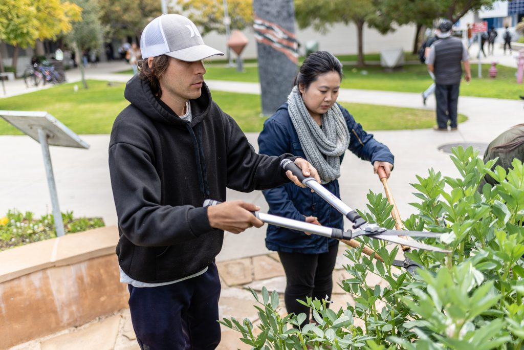 "Anthropology Major Alex Sonnenschein, 29, Of Montrose, Calif., And Biology Major Kelly Hayashibara, 26, Of Mar Vista, Calif., Chop Fava Stalks In The SMC Organic Learning Garden (OLG) On Tuesday, March 5, 2019. Sonnenschein, Hayashibara, And Other Members Of Club Grow Are Chopping The Fava Stalks As Part Of Club Grow's ""Composting With Cover Crop"" Activity. Club Grow Meets Every Tuesday In The OLG. (Glenn Zucman/The Corsair)"