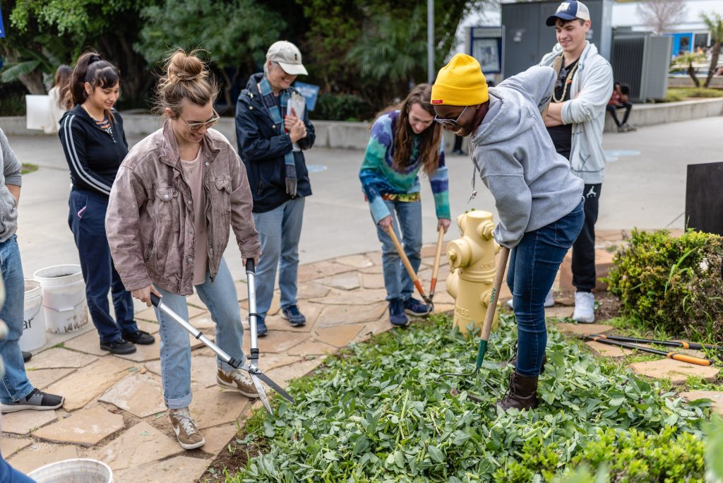 "Madlyn Spence, A 27-Year-Old Conservation Biology Major From Chicago, And Ariana Kidd, A 22-Year-Old English And Japanese Major From Los Angeles, Prepare Chopped Fava Stalks In The SMC Organic Learning Garden On Tuesday, March 5, 2019. Spence, Kidd, And Other Members Of Club Grow Are Preparing The Fava Stalks As Part Of Club Grow's ""Composting With Cover Crop"" Activity. Club Grow Meets Every Tuesday In The OLG. (Glenn Zucman/The Corsair)"