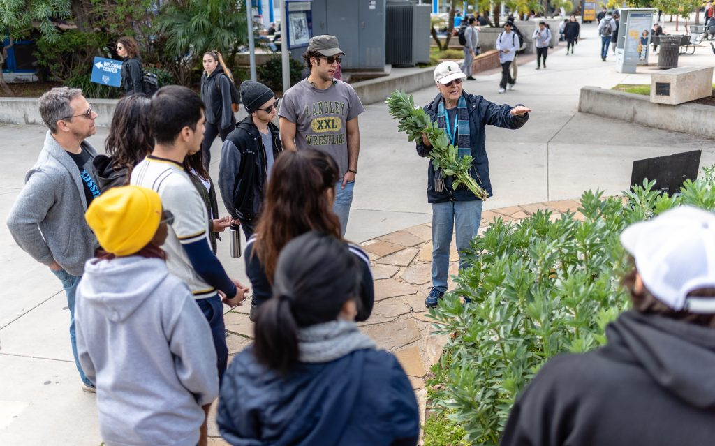 "SMC Organic Learning Garden Leader Dana Morgan, A Master Gardener From University Of California Cooperative Extension, (UCCE) And A Retired SMC English Professor Explains The ""Composting With Cover Crop"" Activity To Members Of Club Grow At The Organic Learning Garden On SMC's Main Campus On Tuesday, March 5, 2019. Morgan Pulled A Few Stalks Of Fava And Asked Students How They Would Best Chop Them Into One Inch Pieces For Composting. The Group Arrived At The Idea That It Would Be Easier And Faster Not To Pull The Stalks But To Chop Them In Place. Morgan Noted That To Think Like A Farmer Is To Think In Terms Of The Most Efficient Way Of Achieving Your Goal. (Glenn Zucman/The Corsair)"