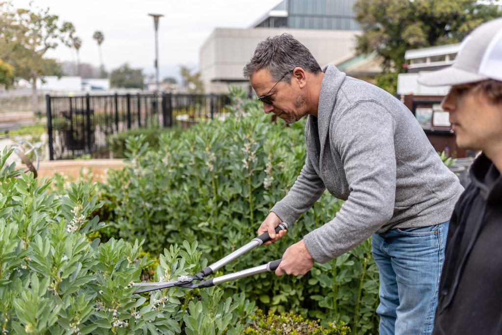 "Eric Newton, 55, A Sustainable Technologies Major From Los Angeles Chops Fava Stalks Into One Inch Pieces As Part Of Club Grow's ""Composting With Cover Crop"" Activity At The SMC Organic Learning Garden On Tuesday, March 5, 2019. The Sustainable Technologies Major Is Part Of SMC's Recycling And Resource Management. Newton Says The The Organic Learning Garden Has Helped In Developing His College Program. (Glenn Zucman/The Corsair)"